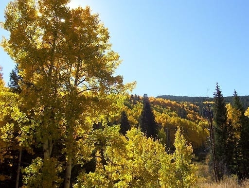 Colorado Fall Foliage Drives