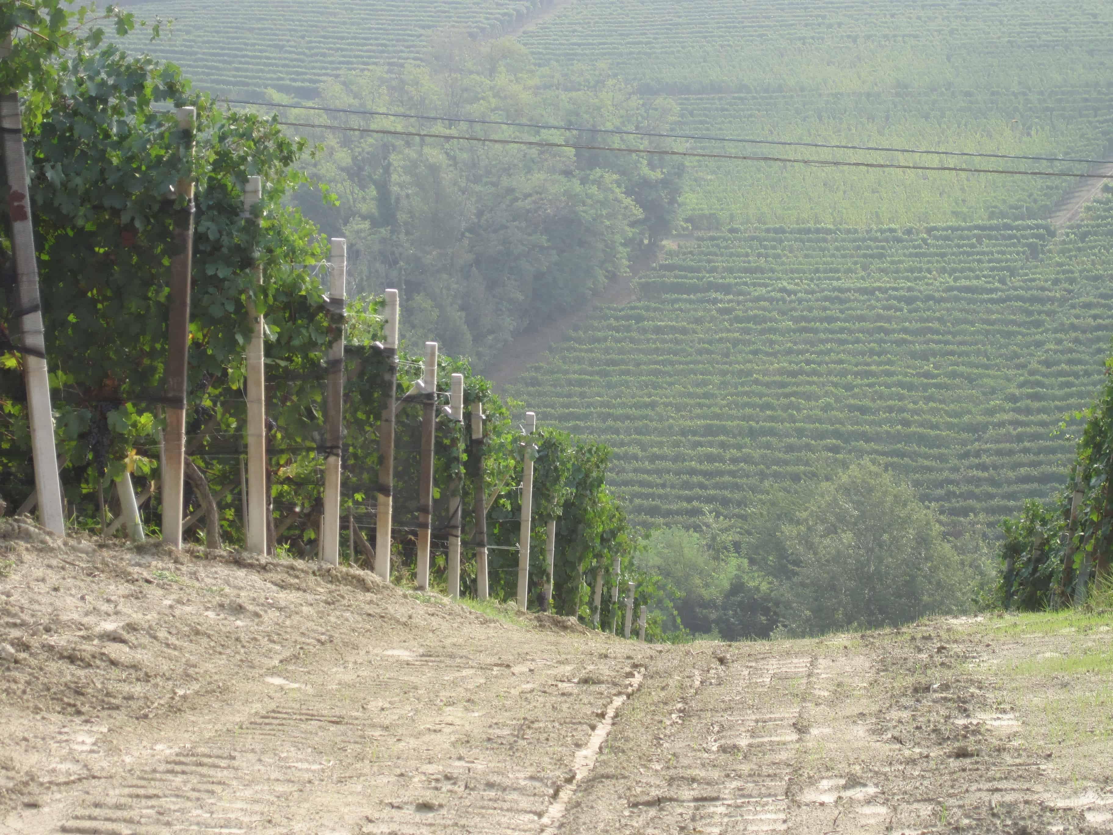 Giovanni Rosso Vineyard in Barolo