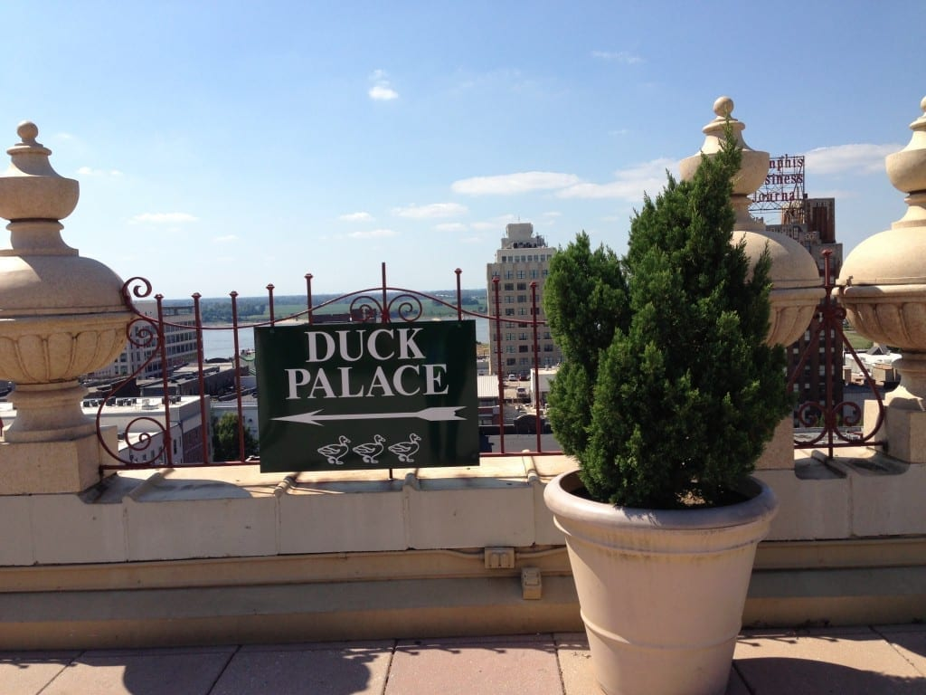 peabody hotel ducks palace