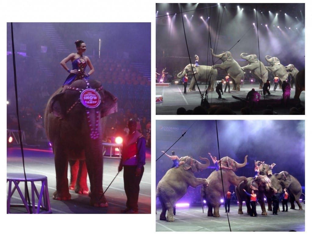 elephants at Ringling Bros. and Barnum & Bailey Circus