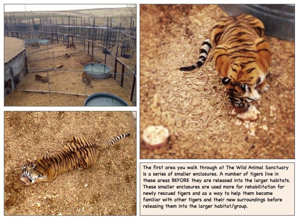 WildAnimalSanctuary_TigerEnclosures