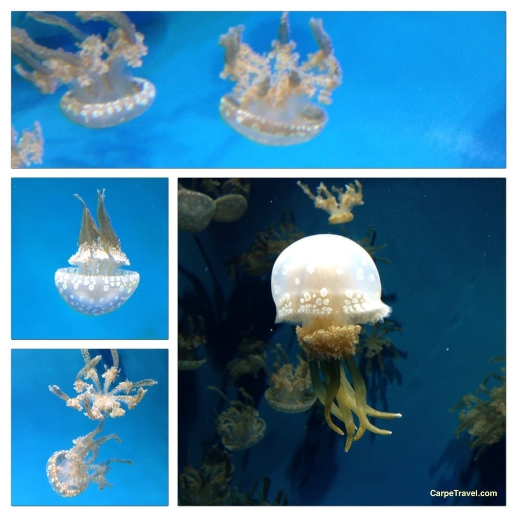 Jellies3_MontereyBayAquarium