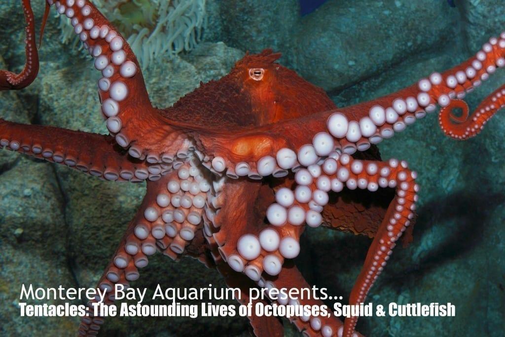 Monterey Bay Aquarium Tentacles