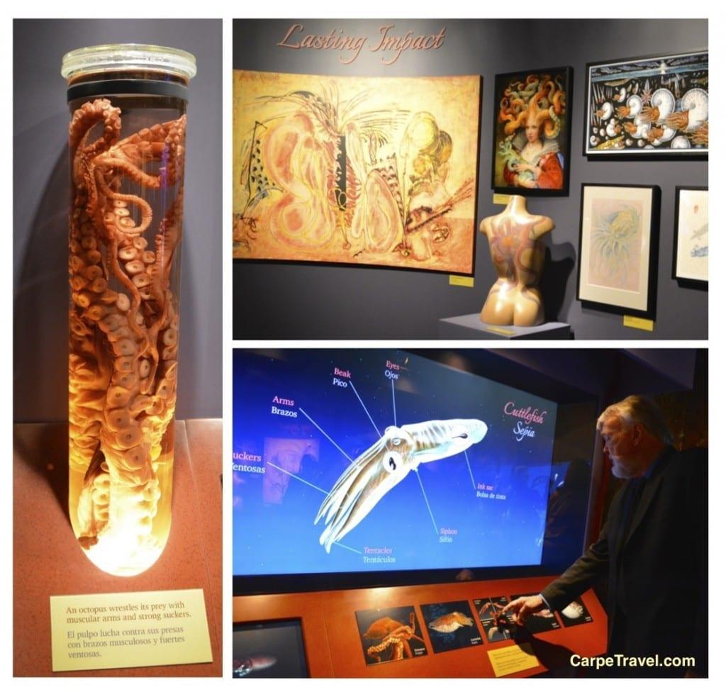 interactive Tentacles Exhibit at Monterey Bay Aquarium