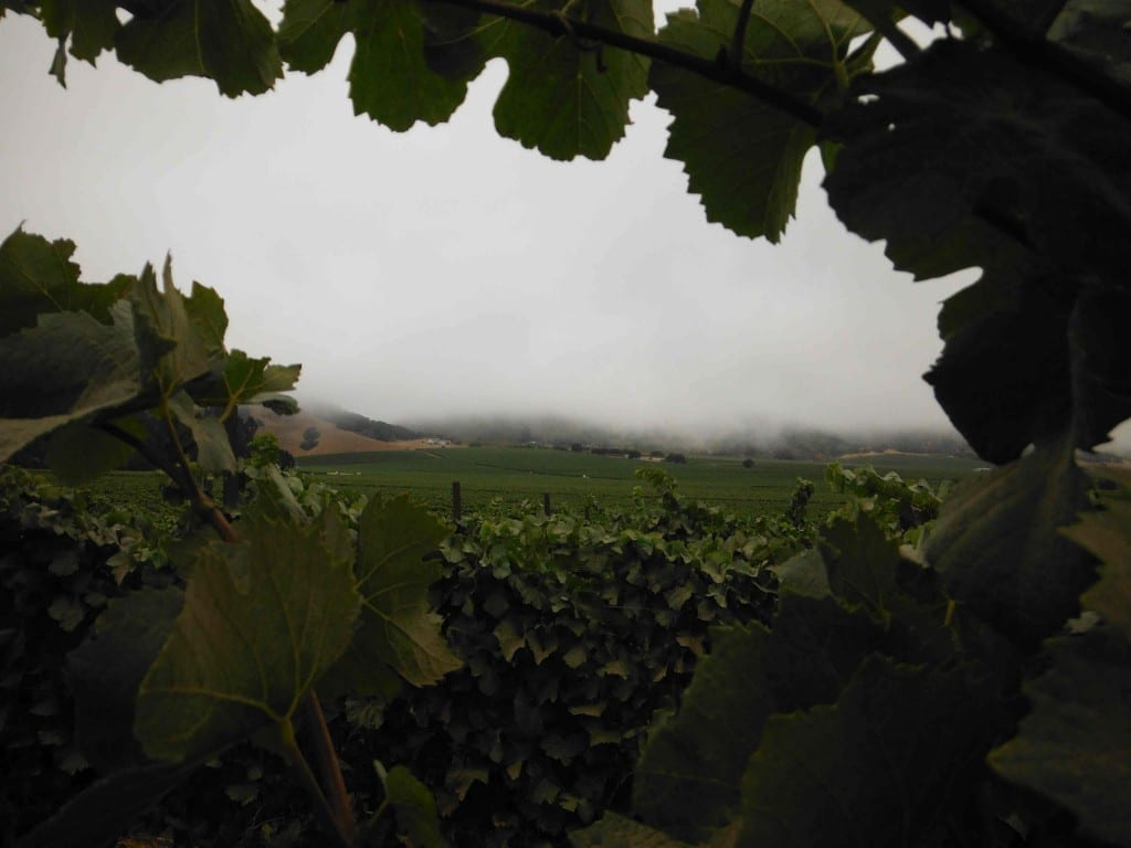 Caraccioli Cellars in Monterey County