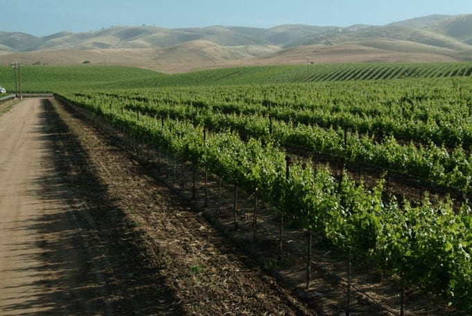 Winereis in Monterey - Scheid Vineyards Mesa del Rio