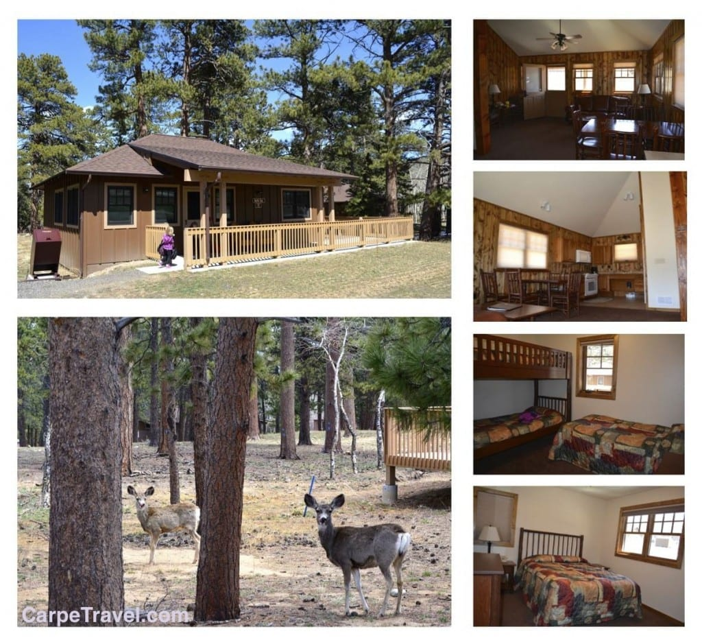 Check in ymca of the rockies estes park center for Estes park dog friendly cabins