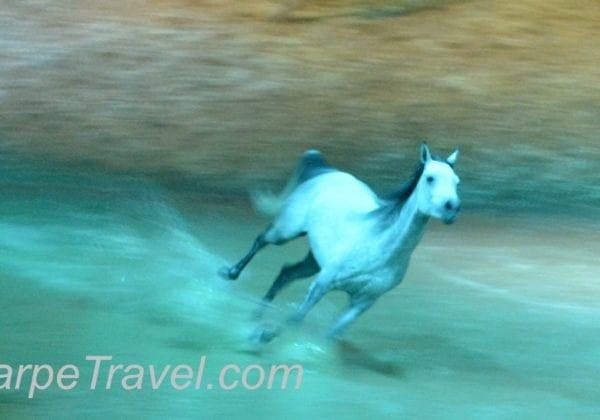 Odysseo in Denver Horses