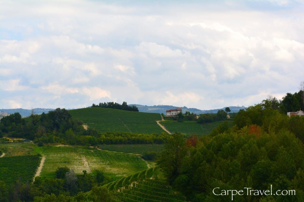 ettore germano vineyard in piedmont wine region