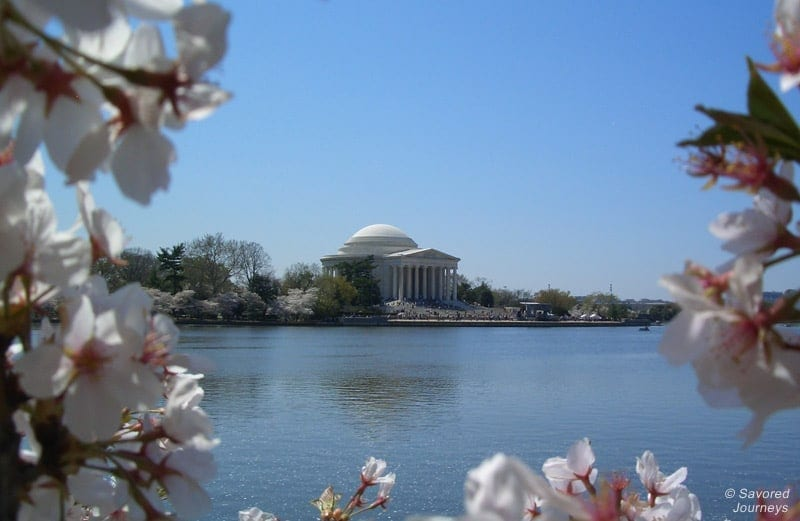 Jefferson Memorial during cherry blossom season. Photo by Laura Lynch at SavoredJourneys.com
