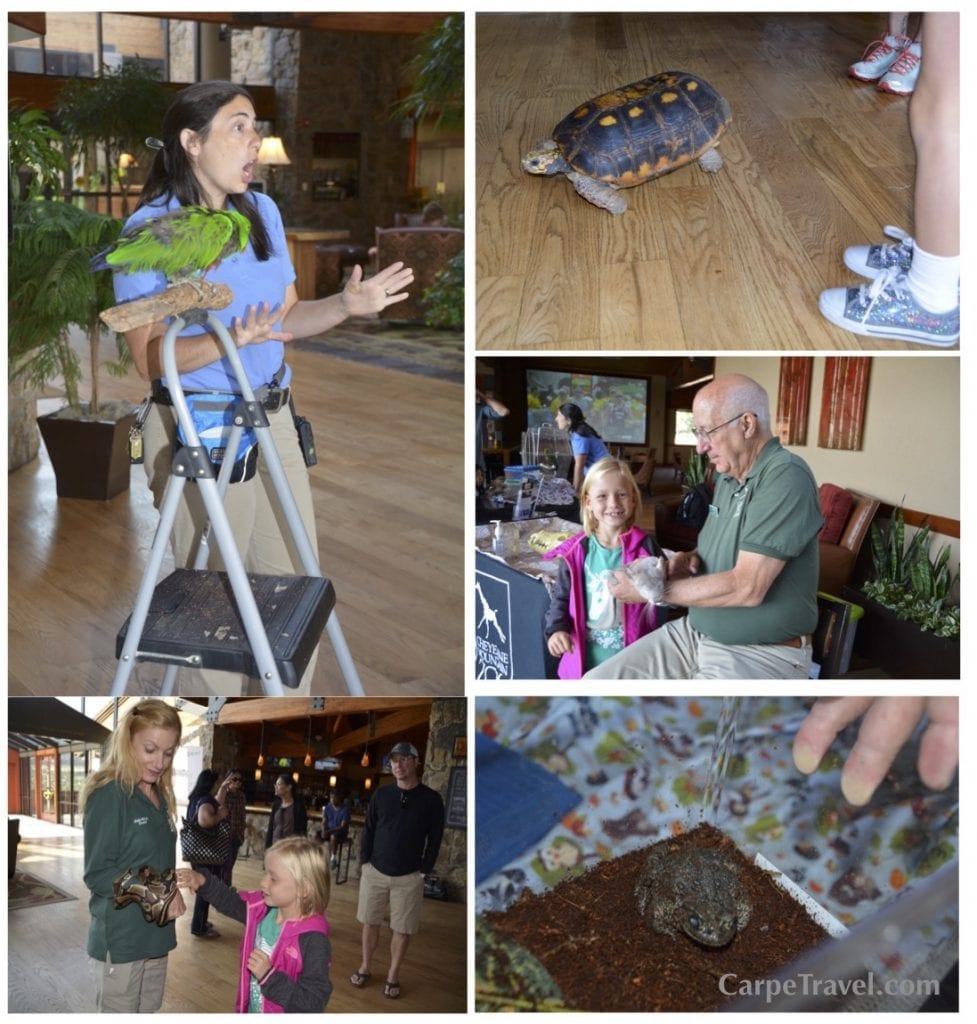 The dining highlight at Cheyenne Mountain Resort for my daughter was on Saturday morning where we got to have breakfast with several zoo animals who came for a visit from Cheyenne Mountain Zoo. Before we headed into The Mountain View Restaurant she raced a tortoise, sang with a Parrot, learned about chinchillas and an endangered Colorado frog. The live animal encounter is something she won't soon forget, if ever. (Breakfast with the Zoo animals is done ever Saturday morning in the hotel lobby. During the winter animals may not visit the resort.) Click over for Carpe Travel's full review of Cheyenne Mountain Resort in Colorado Springs.