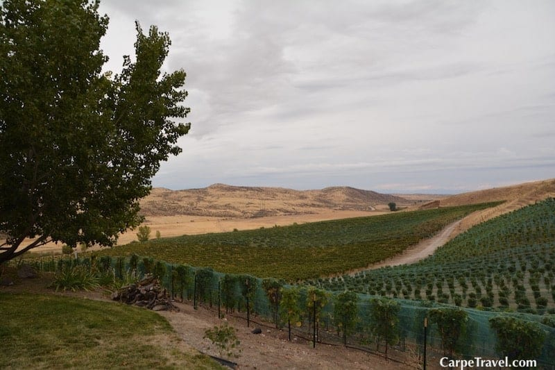 Click over for a complete guide to the Idaho wine region designed to help you plan your Idaho wine experience - map out wineries not to miss, resources that can help along the way, which wine trails to visit and much more.