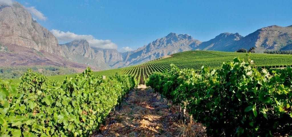 Fairview Wine Farm - One of the Top 10 Must Sip Cape Town Wineries
