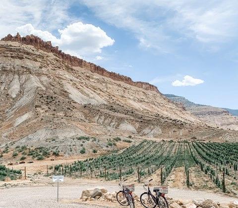 Colorado Wine Region