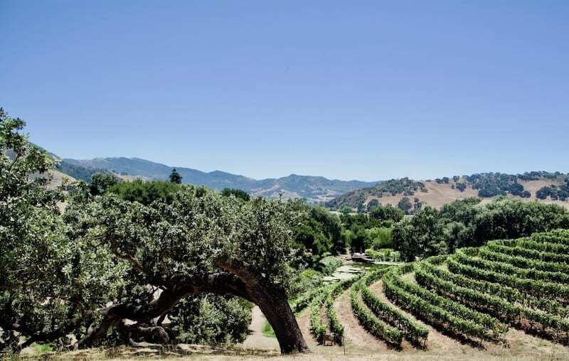 Pence Vineyards, one of the Santa Ynez Valley wineries not to miss