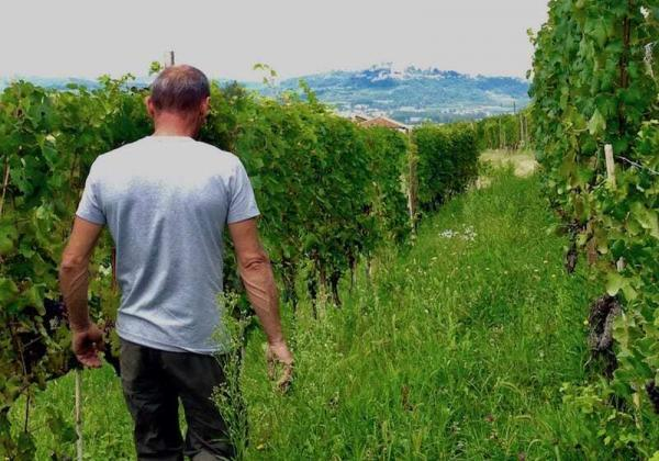 Wine Travel to Piedmont Italy, touring Franco Rocca Wine