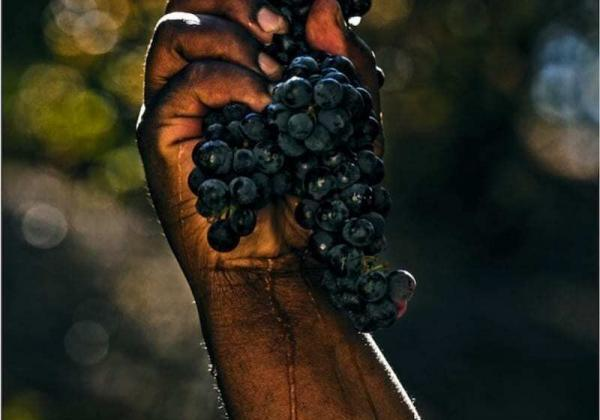 Black owned wineries in the United States