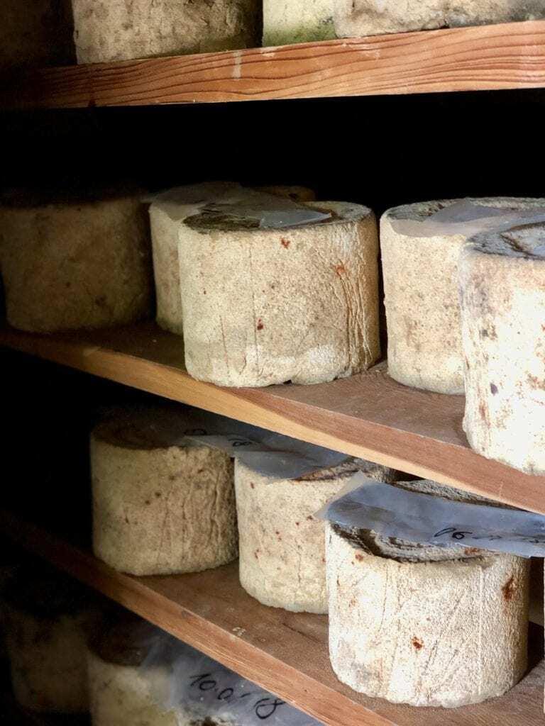 barolo cheese pairing