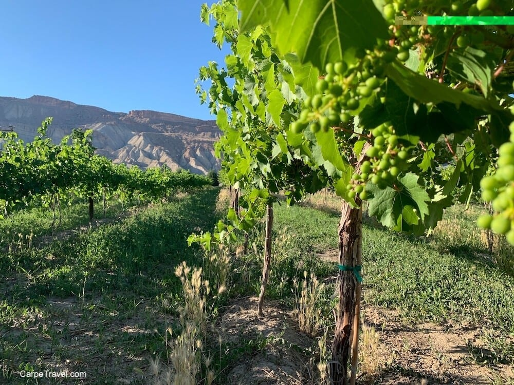 Colorado Wine Country Best - A Guide to the BestWineries in Palisade