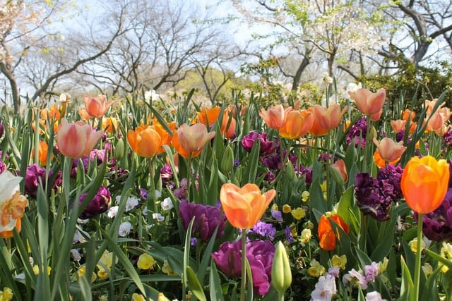 Dallas Arboretum and Botanical Garden Things to do in Dallas
