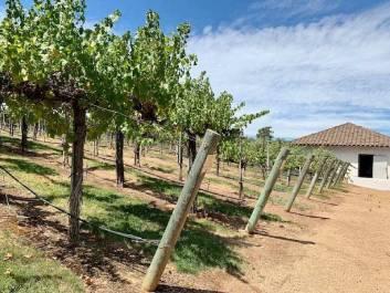 Wine Tasting in Santa Ynez Valley