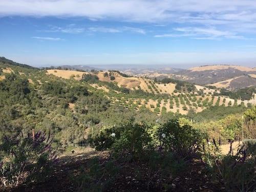 Wine Tasting in Paso Robles - DAOU