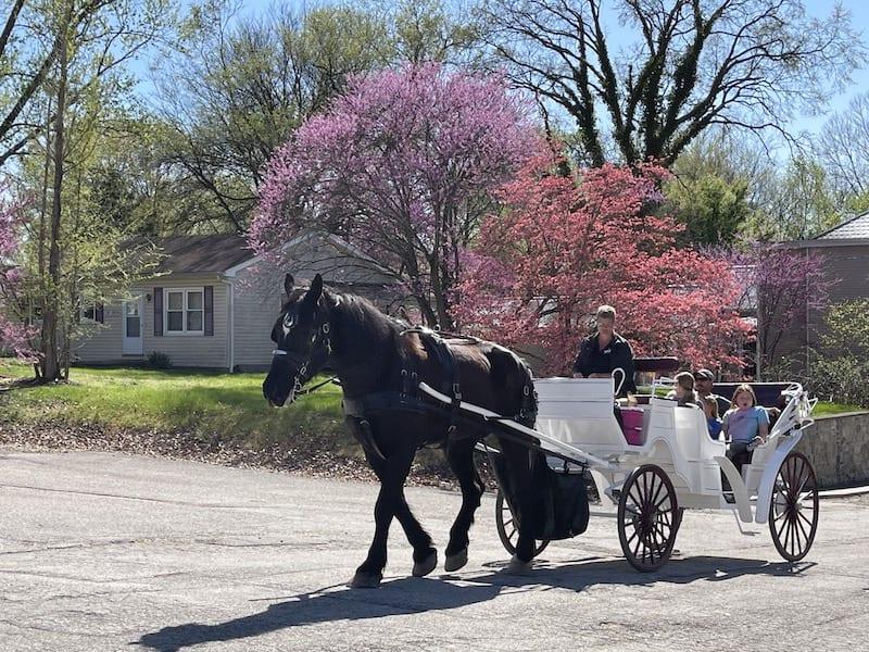 Carriage Ride in Augusta Missouri