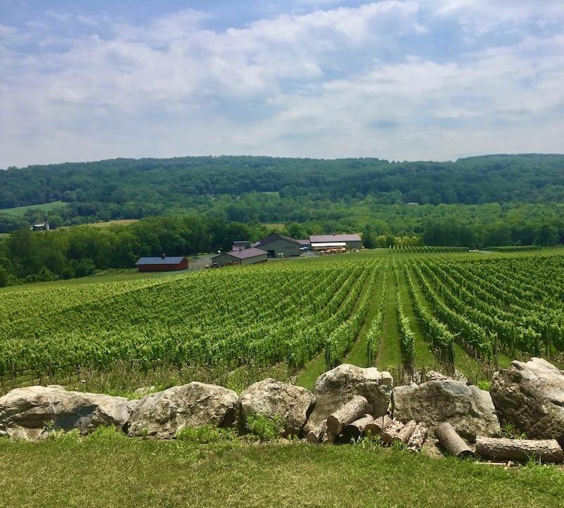 New Jersey Winery - Alba Vineyard