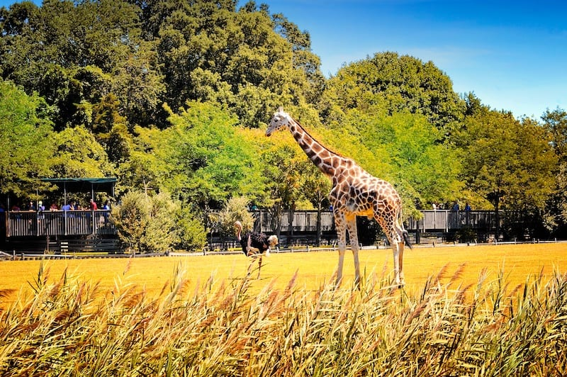 Things to do in New Jersey Cape May Zoo