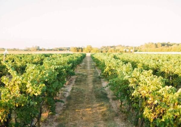 Tomasello Winery is One of the Top Wineries in New Jersey