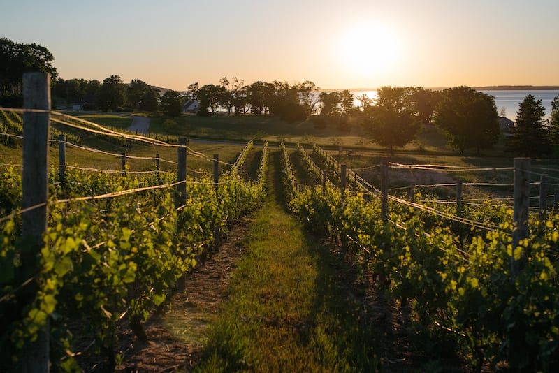 Traverse City Winery - Mari Vineyards