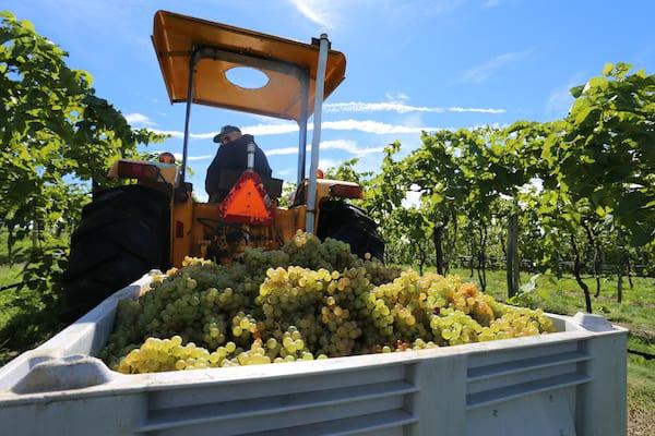 Galen Glen Pennsylvania Wineries