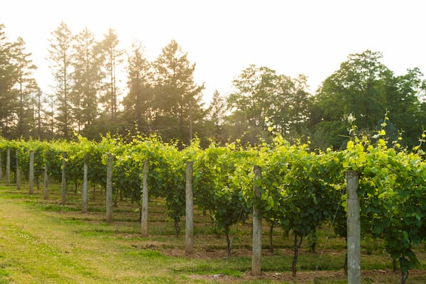 Pennsylvania Wineries - Galer Estate Vineyard and Winery