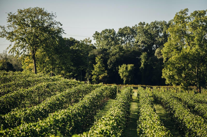 Michigan Wineries, Youngblood Vineyard