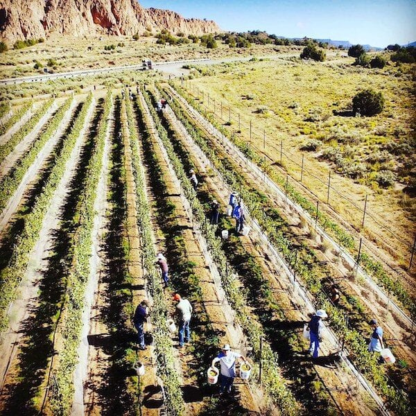 Vivác Winery in New Mexico Wine Country