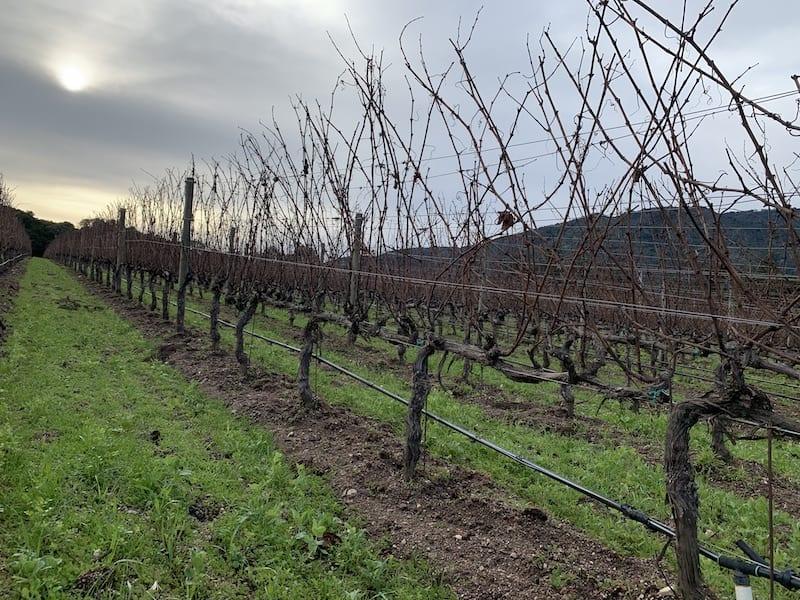 Wineries in Monterey County