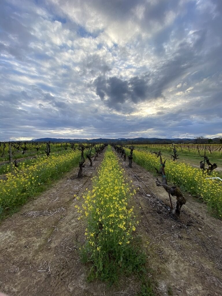 Sonoma Wineries Aperture Cellars by Collin Smith