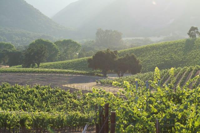 Monterey Wine Tasting - Bernardus Marinus Vineyard, Photo by Bernardus