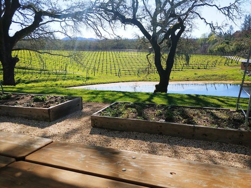 N Sonoma Wineries Medlock Ames by Brooke Herron