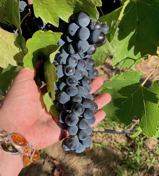 Wine tasting in Walla Walla wine country