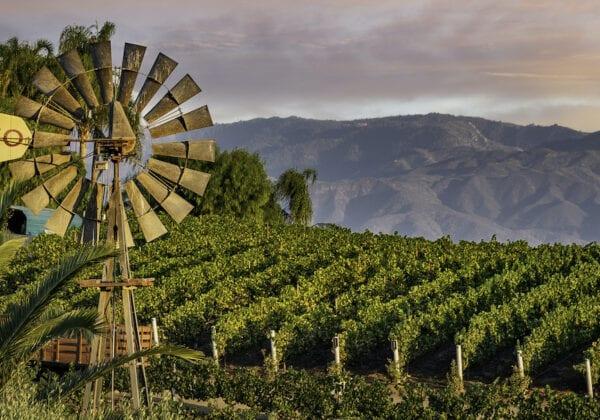 Temecula Wineries to Vist - Doffo Vineyard