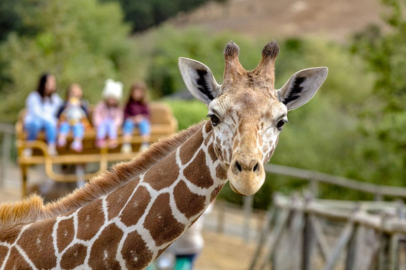 Where to stay in Sonoma Safari West