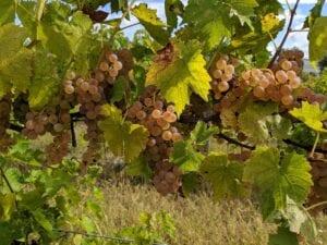 Ohio Wineries - Klingshirn Winery