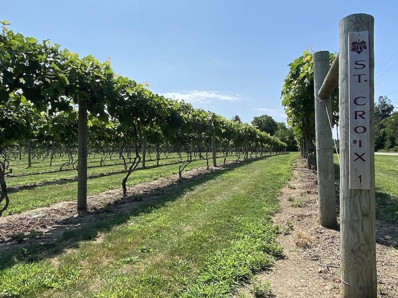Ohio Wineries - The Vineyards at Pine Lake